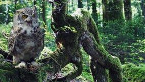 Owl, Tree, Fauna, Bird Stock Photos