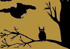 Owl on tree Stock Photos