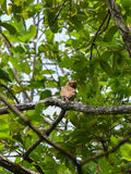 Owl on tree nature royalty free stock photography