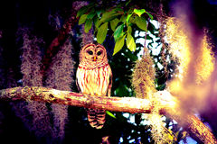 Owl in a tree Stock Images