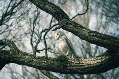 Owl on tree. Owl sits on tree in forest royalty free stock photo