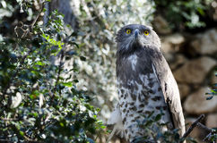 Owl. On the tree. Zoo Royalty Free Stock Image