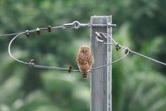 Owl turn head back Royalty Free Stock Photos