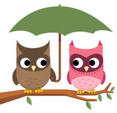 Owl umbrella. Owl couple perching under Umbrella  illustration Stock Photo