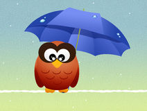 Owl with umbrella Royalty Free Stock Image