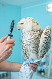 Owl at vet Stock Photography