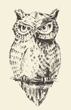 Owl vintage illustration retro hand drawn sketch Royalty Free Stock Photos