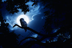 Owl Watches Intently Illuminated By Full Moon On H. This is a photo illustration of a quiet night, a bright moon rising over the clouds illuminates the darkness Royalty Free Stock Photography