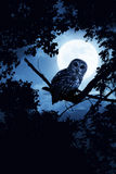 Owl Watches Intently Illuminated By Full Moon On H. This is a photo illustration of a quiet night, a bright moon rising over the clouds illuminates the darkness Royalty Free Stock Image