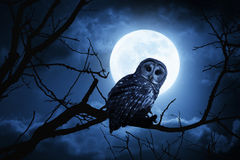 Owl Watches Intently Illuminated By-Volle maan op Halloween-Nacht royalty-vrije stock foto