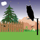 Owl watching Royalty Free Stock Photos