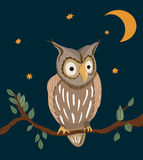 Owl watching Stock Images