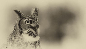 Owl watching Royalty Free Stock Photography