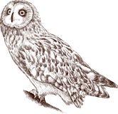 Owl watching Royalty Free Stock Image