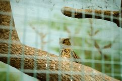OWL is watchingin behind the net in the aviary in Kyiv Zoo stock photo