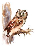 Owl Watercolor Bird Illustration Hand ha dipinto Fotografia Stock Libera da Diritti