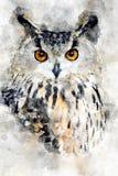 Owl - watercolor illustration portrait stock photography