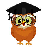 Owl wearing Graduation Cap Royalty Free Stock Images