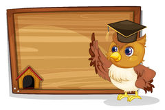 An owl wearing a graduation cap beside a wooden board Royalty Free Stock Photo