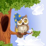 Owl wearing a hat sitting on a tree branch Royalty Free Stock Photography