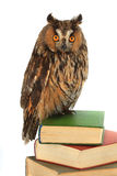 Owl. On a white background Stock Images
