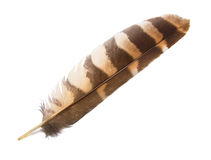Owl Wing Feather Isolated Royalty Free Stock Photo