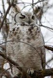 Owl Wink Royalty-vrije Stock Afbeeldingen