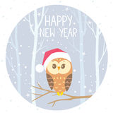 Owl winter color Royalty Free Stock Image