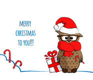 Owl_winter Stock Image