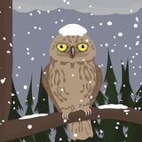 Owl at winter woods Stock Image