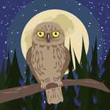Owl at woods with full moon Stock Photo