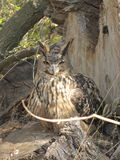 Owl in the woods. Near the stump Royalty Free Stock Images