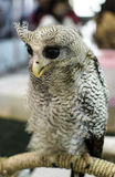 Owl With a yellow beak Royalty Free Stock Photos