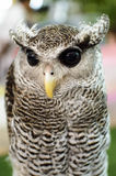 Owl With a yellow beak Stock Images