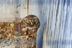 Owl in the zoo Stock Photos