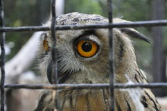 The owl at the zoo Royalty Free Stock Photography