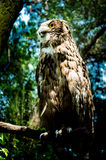 The owl in the zoo Royalty Free Stock Images
