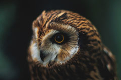 Owl. In the zoo of the city of Kazan Royalty Free Stock Photos