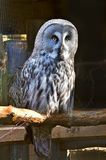 Owl zoo Stock Images