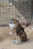 Owl in zoo Royalty Free Stock Photo