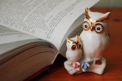 Owlen är ett symbol av kunskap Fotografering för Bildbyråer