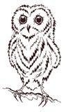 owlet Fotos de archivo