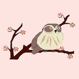 owlet Arkivbilder