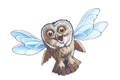 Owlet-elfe Photographie stock libre de droits