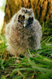 Owlet. A little lost in the forest owlet royalty free stock photos