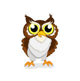 Owlet royalty free stock images