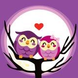 Owlförälskelse kopplar ihop Royaltyfria Foton