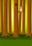 Owlin het bos Royalty-vrije Stock Foto