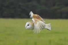 Owling ungefähr lizenzfreie stockbilder