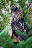 owlmateriel Royaltyfria Bilder